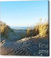 Late Afternoon Light Waikuku Beach Canvas Print
