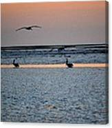 Late Comers Canvas Print