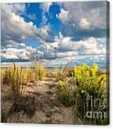 Late Summer Dunes Ocean City Canvas Print