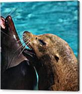 Laughing Seals Canvas Print