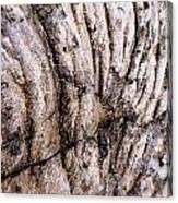 Lava Design Canvas Print