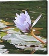 Lavendar Aqua Queen Canvas Print