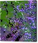 Lavender 2 Canvas Print