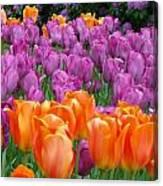 Lavender And Orange Tulips Canvas Print