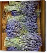 Lavender Bundles Canvas Print
