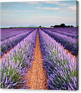 Lavender Field In Blossom Canvas Print
