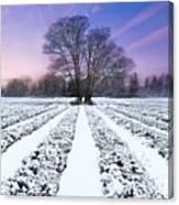 Lavender In Winter Canvas Print