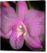 Lavender Orchid Canvas Print