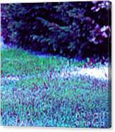 Lawn Blue Canvas Print