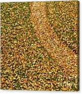 Lawn Covered With Fallen Leaves Canvas Print