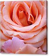 Layers Of Pink Petals Canvas Print
