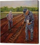 Laying Off Rows Canvas Print