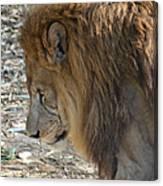 Le Lion Canvas Print