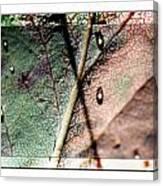 Leaf After Rain Canvas Print