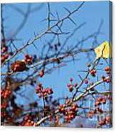 Leaf Among Thorns Canvas Print