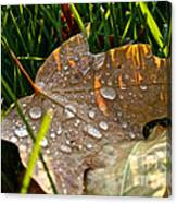 Leaf Beads Canvas Print