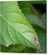 Leaf Blemish Canvas Print