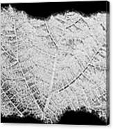 Leaf Design- Black And White Canvas Print