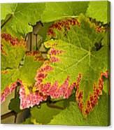 Leaf Design Canvas Print