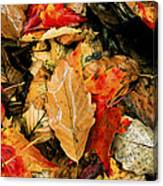 Leaf Fresco Canvas Print
