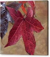 Leaf In Red Canvas Print