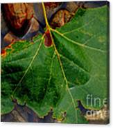 Leaf In The River Canvas Print