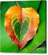 Leaf Leaf Heart Love Canvas Print