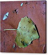 Leaf Libretto Canvas Print