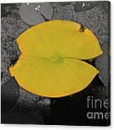 Leaf On A Pond II Canvas Print