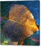 Leaf Portrait 5 Canvas Print