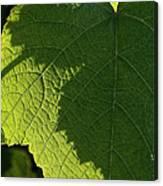 Leaf Shadow Canvas Print