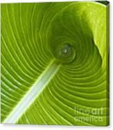 Leaf Tube Canvas Print