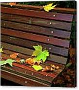 Leafs In Bench Canvas Print