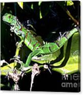 Leapin Lizards Canvas Print