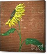 Leavenworth Sunflower  Canvas Print