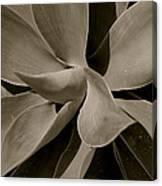 Leaves II - Mono Canvas Print