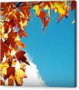Leaves In The Sky Canvas Print