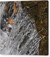 Leaves In The Water Canvas Print