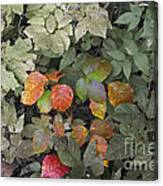 Leaves Of Three   Let It Be Canvas Print