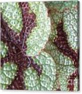Leaves With Beautiful Texture Canvas Print