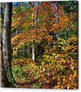 Leaving Cary Lake Canvas Print