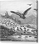 Lemming Migration Canvas Print