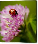 Lensbaby Ladybug On Pink Clover Canvas Print