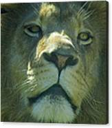 Leo,lion Canvas Print