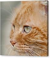 Leo The Kitty Beast Canvas Print