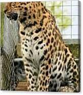 Leopard 5 Canvas Print
