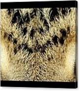 Leopard Eyes Canvas Print