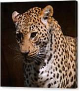 Leopard I Canvas Print