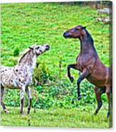 Leopard V Standardbred Canvas Print
