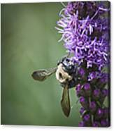 Liatris And Bee Squared 2 Canvas Print